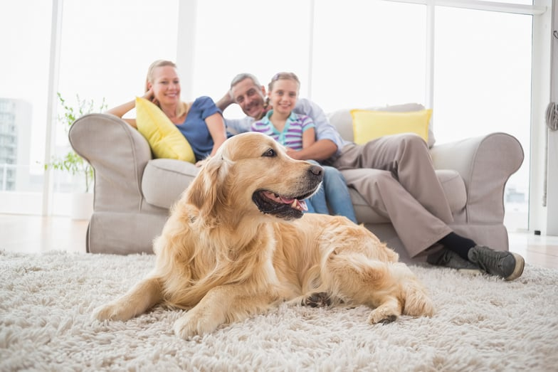 smithtown ny family and dog on clean area rug